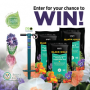 Win a Hyacinth Fall Bulb Garden Giveaway in online sweepstakes